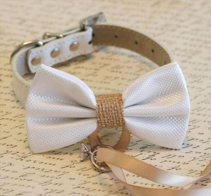 dog bow tie with belt