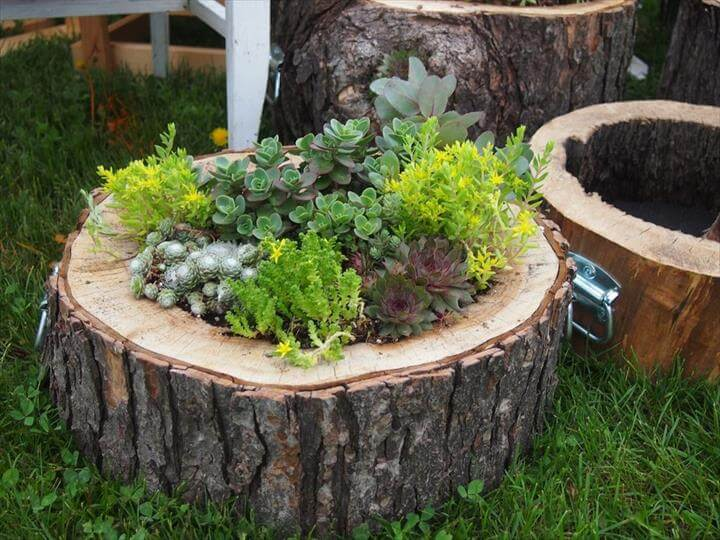 Best DIY Log Planter Ideas