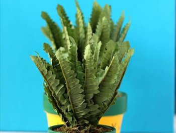 Diy Cute Pineapple Planters