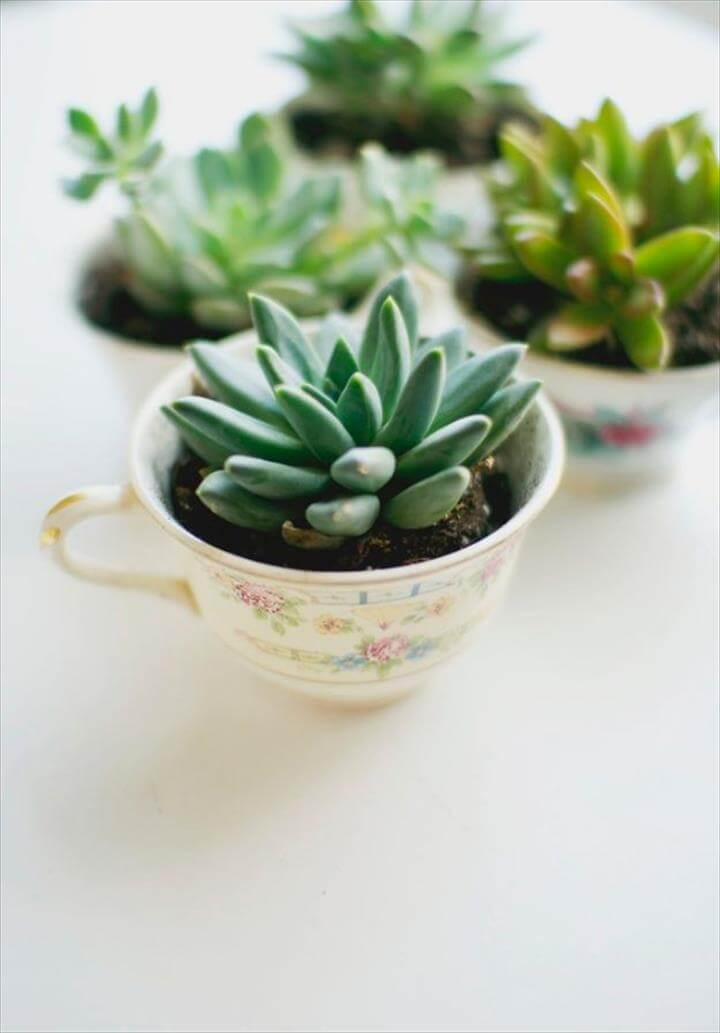 DIY Mothers Day Gift Ideas - Easy DIY Tea Cup Planter - Homemade Gifts for Moms