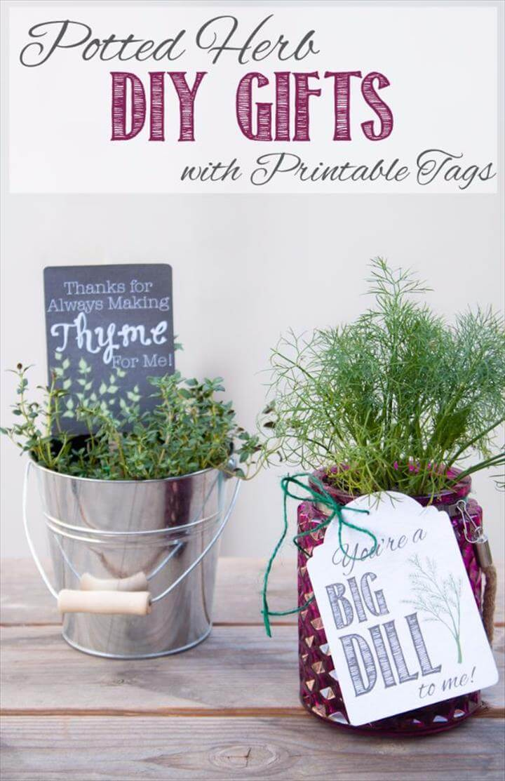 Potted Herb DIY Gift